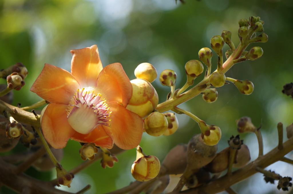 Prachtige bloemen op Bali. Heel fijn om te oefenen met je camera!
