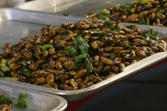 Hungry for some insects?