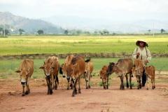 Local shepherd comes back from her land -  Buon von Hua - Esmeralda Groen